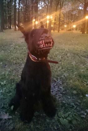 Museruola Lupo mannaro werewolf